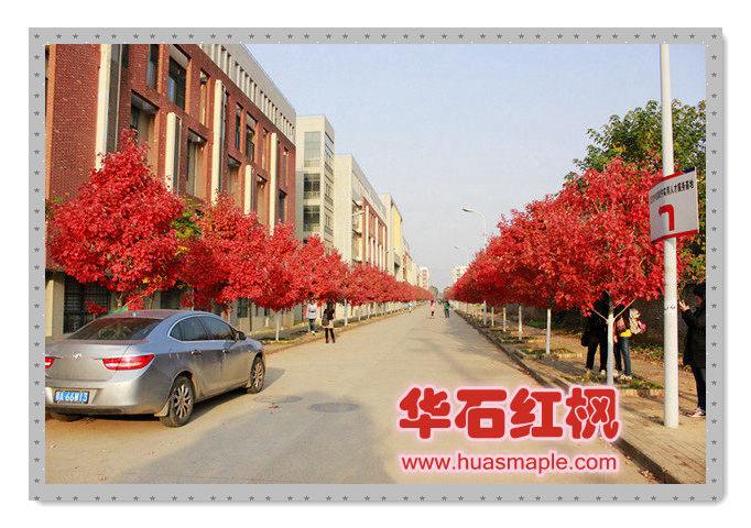 武汉的十月光辉实景照片