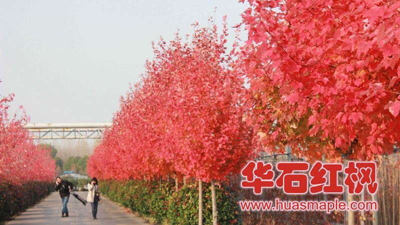 上海的十月光辉实景照片
