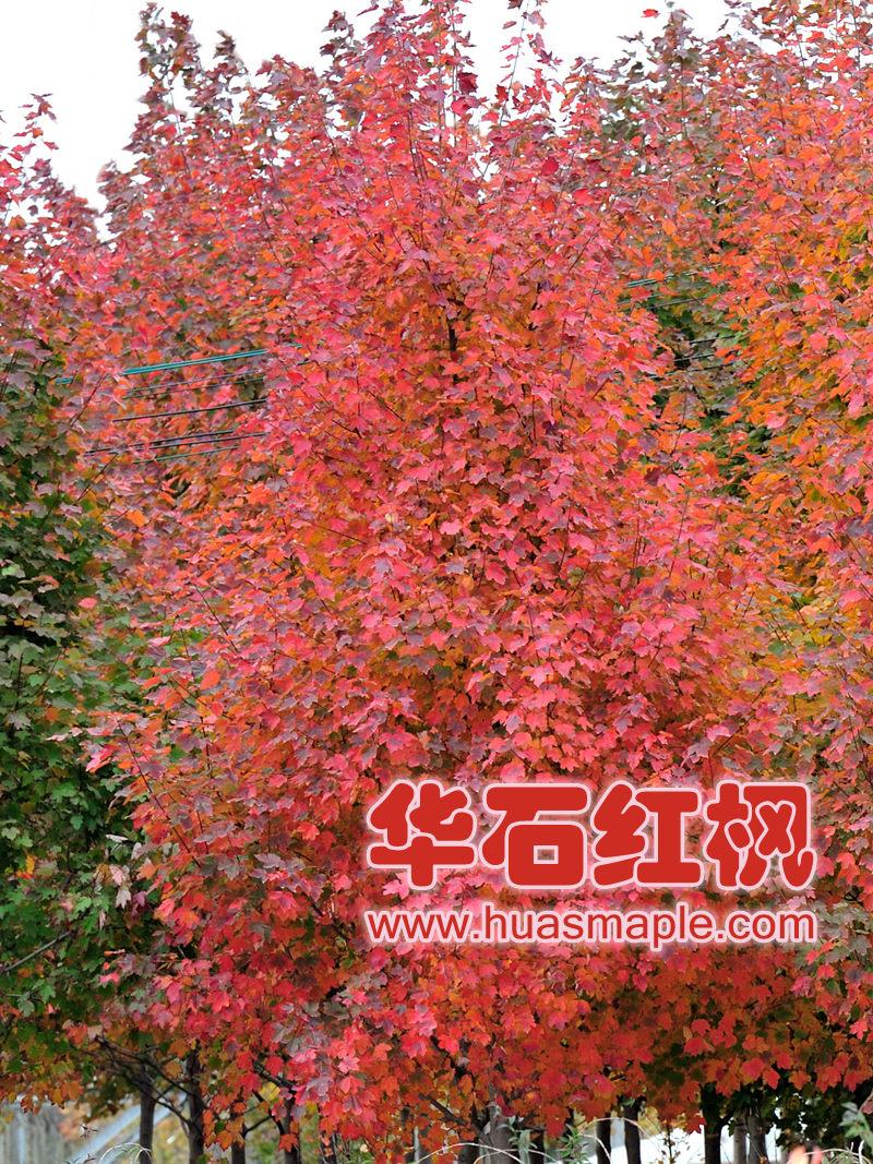 上海的十月光辉