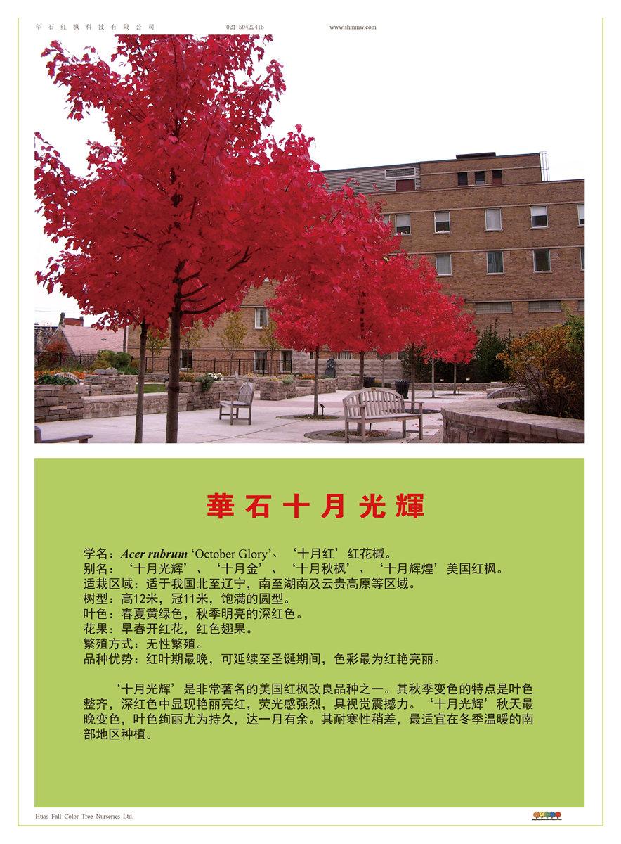 美国红枫十月光辉资料介绍
