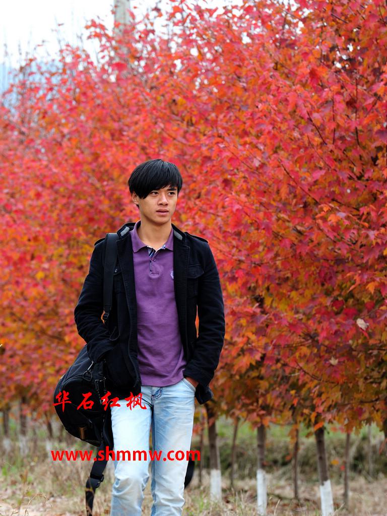 华石秋日烈焰红枫