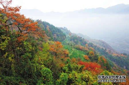 每到11月,鄞州章水镇的四明山中,秋叶斑斓。